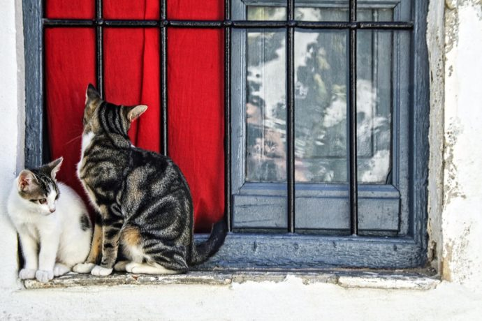 Pets and leasehold – can kitty come in? | MIH Property Management